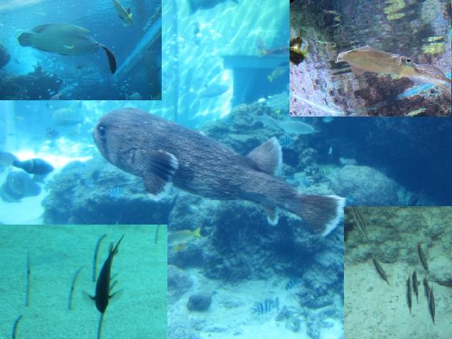 2・水族館魚フグ2.JPG