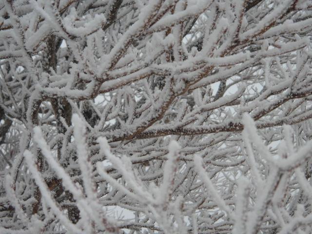 樹氷樹氷.JPG