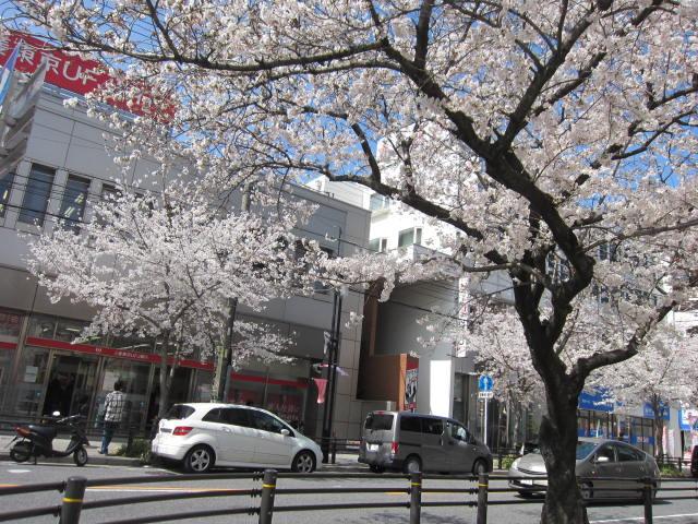 藤ヶ丘の桜・3.JPG