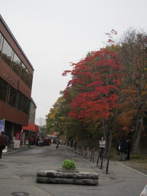 2・大沼公園通り.JPG