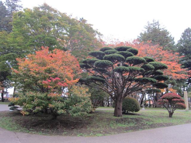 2・香雪園紅葉7.JPG