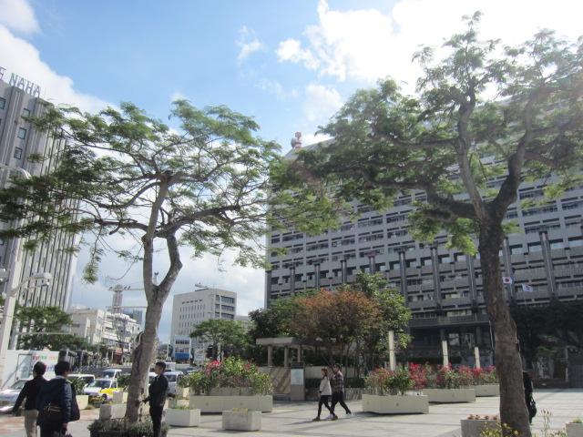 3・沖縄県庁前街路樹.JPG