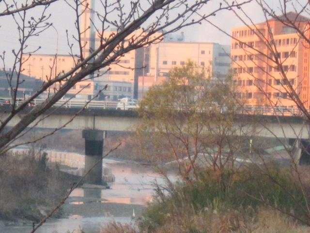 23日矢田川・1.JPG