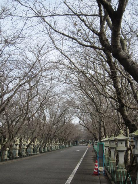 3・知覧特攻会館の道.JPG